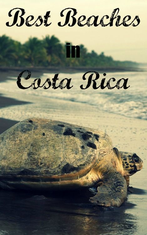 If you're headed to Costa Rica to check out the beaches, though, you may feel a little overwhelmed for choice—nestled between the Pacific and the Caribbean, Costa Rica has literally hundreds of beaches.  Here are some of the best beaches in Costa Rica.    #costarica #centralamerica #turtle #ocean #sea #ecotourism