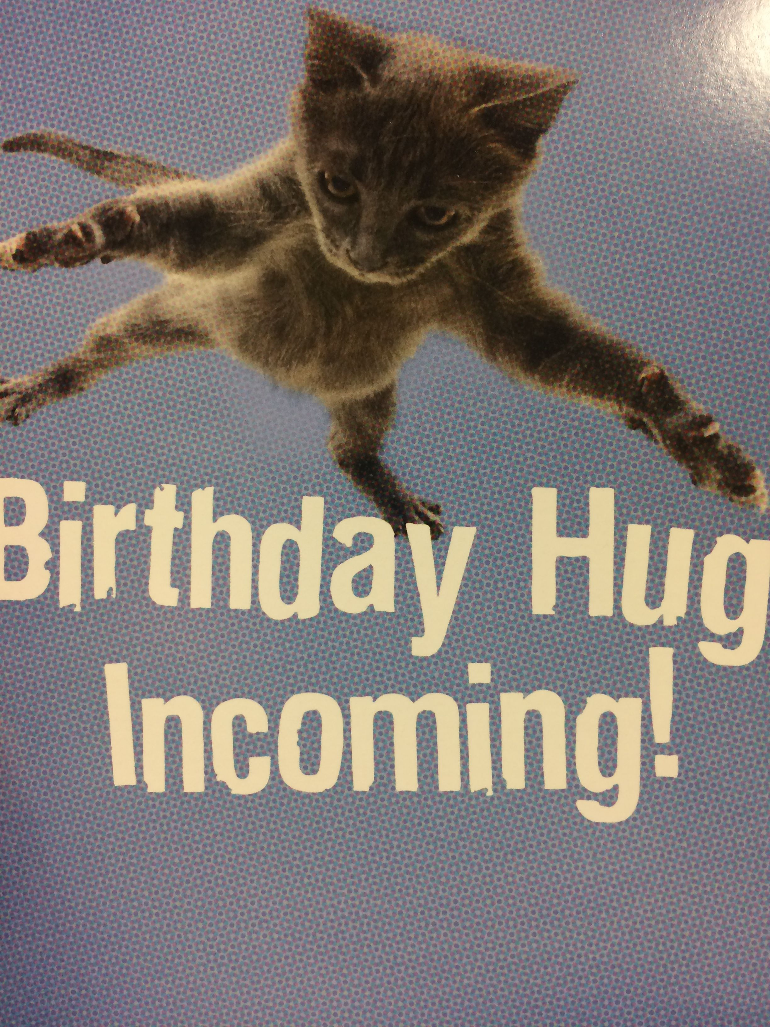 Funny Happy Birthday Cat Meme : Pin by cherie czabala on cat pictures birthdays