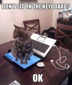 funny-cat-logic-6__605  - Catsincare.com