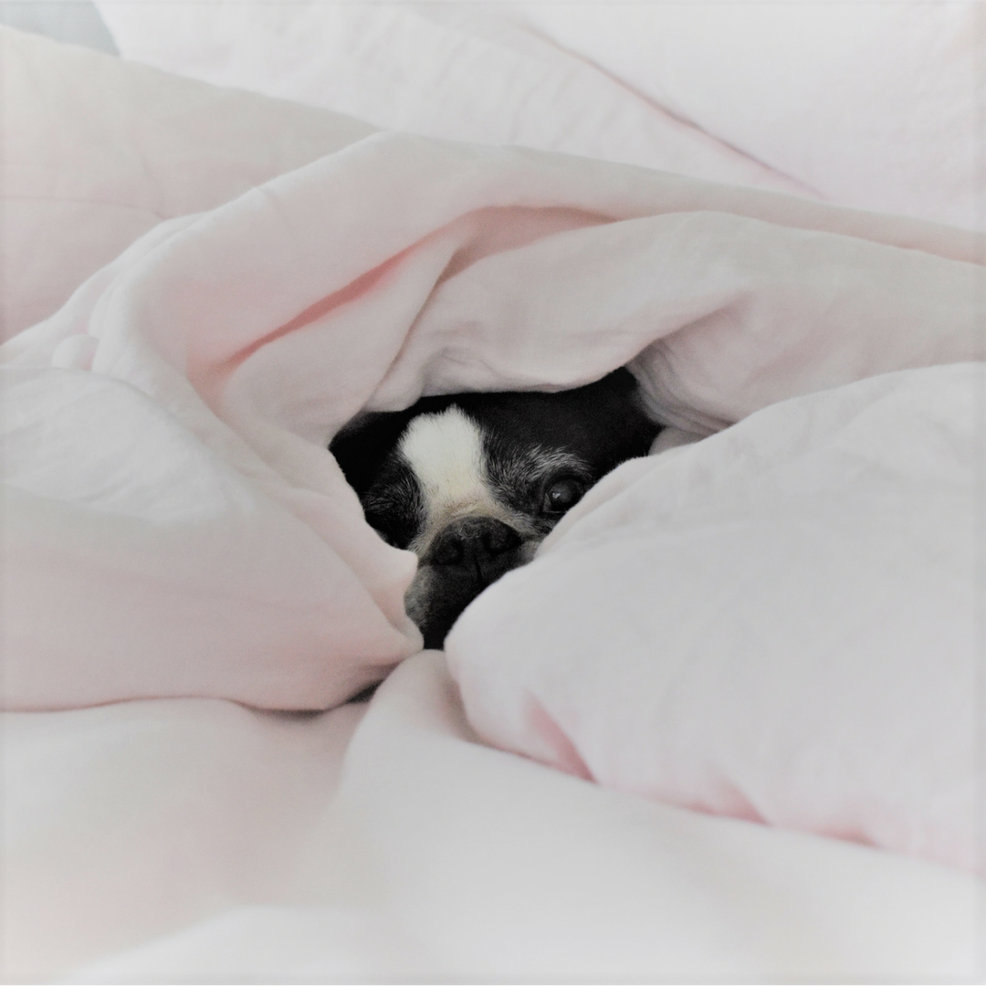 Blush Pink Linen Duvets are great for your pooch Linen