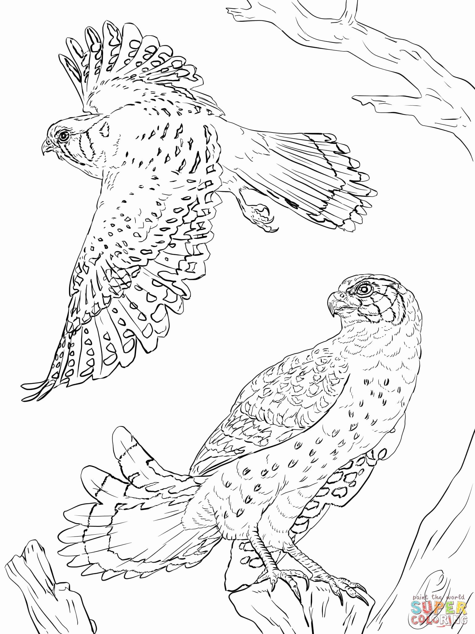 Peregrine Falcon Coloring Page Awesome Peregrine Falcon Clipart Coloring Page Pencil A Spring Coloring Pages Animal Coloring Pages Coloring Pages Inspirational