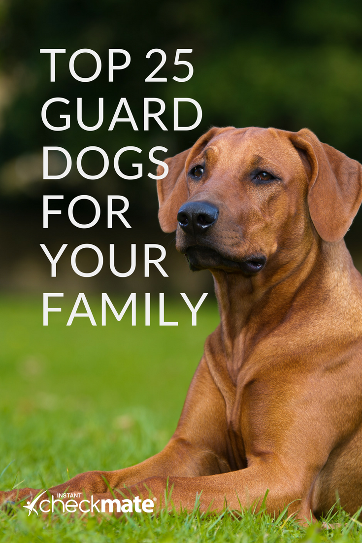 25 Best Guard Dog Breeds For Your Family Guard Dog Breeds Best