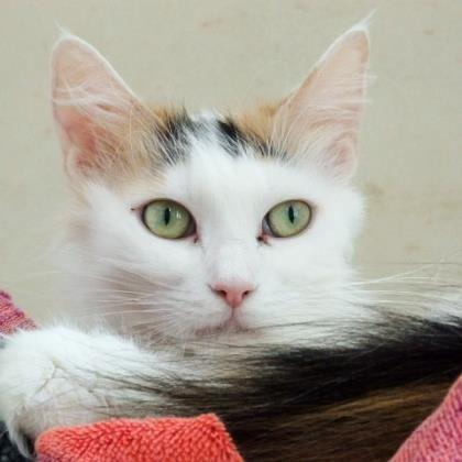 Cats Cat adoption, Adoption, Adoption awareness