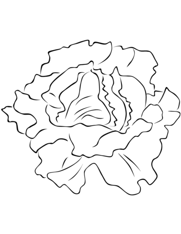 Lettuce Coloring Page Coloring Pages Free Printable Coloring Pages Printable Coloring Pages