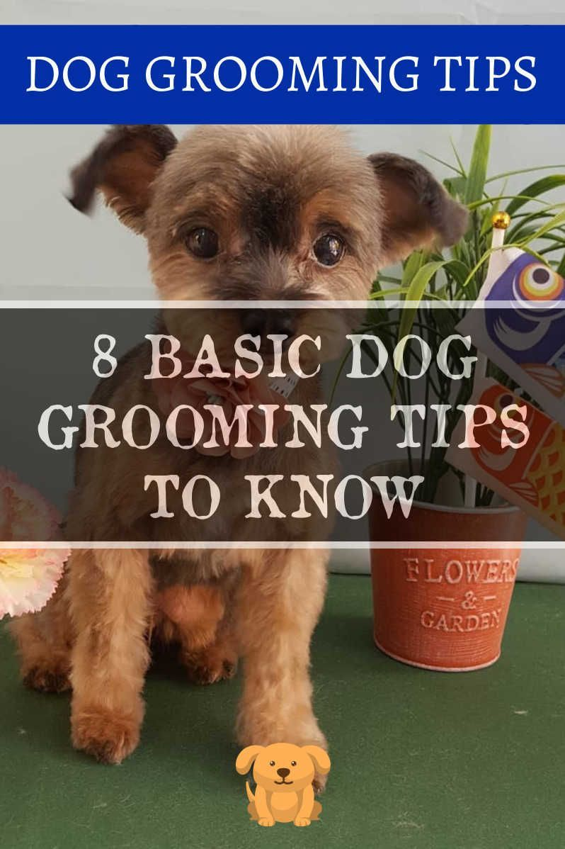 Dog Grooming Tips Techniques And Bathing Methods More Details
