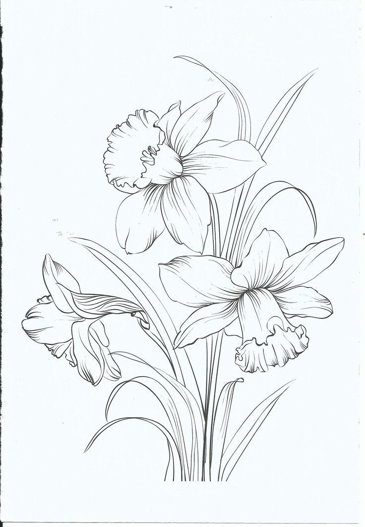 Kleurplaat Kleurplaat Blumen Zeichnen Blumen Zeichnung Blumenzeichnung