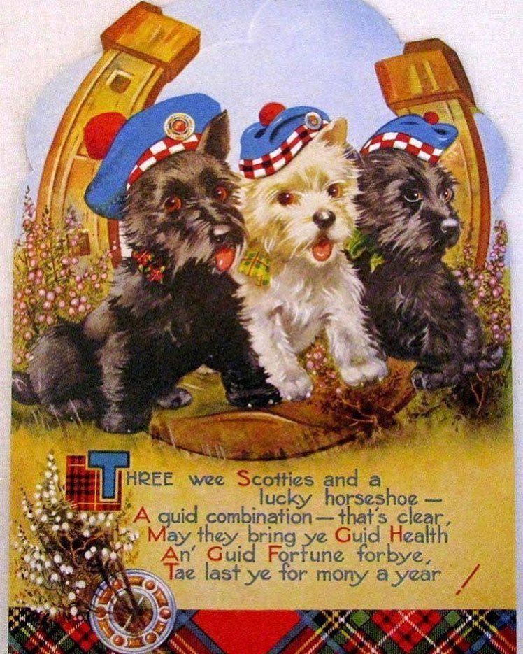 A very happy new year to all our Scottie (and other breeds