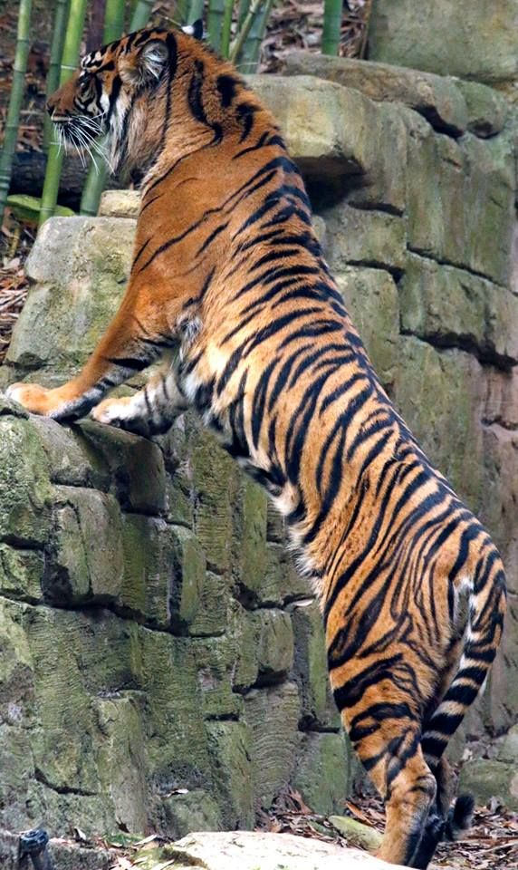 Pin by Mjolnir > on animal kingdom (With images) Wild