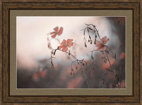 Jenny Rainbow Fine Art Photography Framed Print featuring the photograph Blue Flex Flower. Aliens by Jenny Rainbow