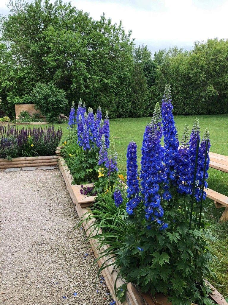 Delphinium Landscape Design Front Yard Plants Delphinium