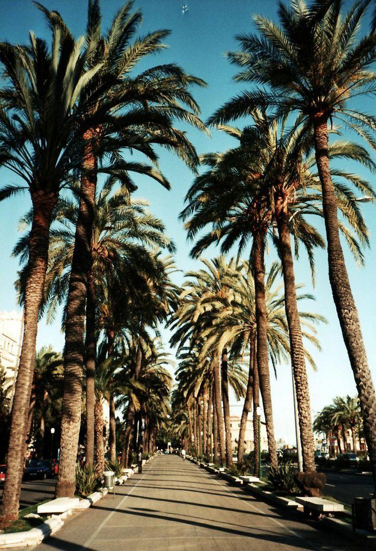 Palm Drive La California Nature Scenery Palm Trees