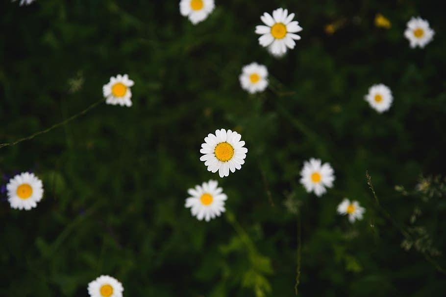 Terbaru 19 Gambar Kebun Bunga Aster Halaman 6 Gratis Bunga Daisy Putih Foto Piqsels 5 Taman Bunga Di Indonesia Ini Sempurna Untuk La Di 2020 Kebun Bunga Bunga Aster