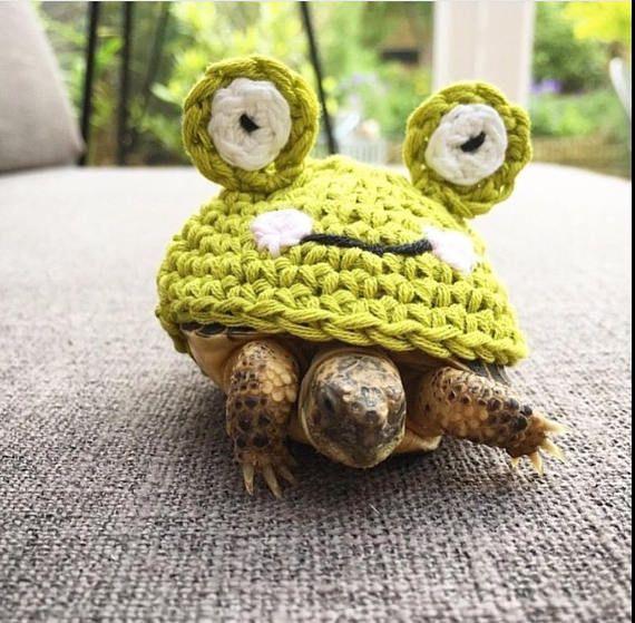 Frog tortoise cozy
