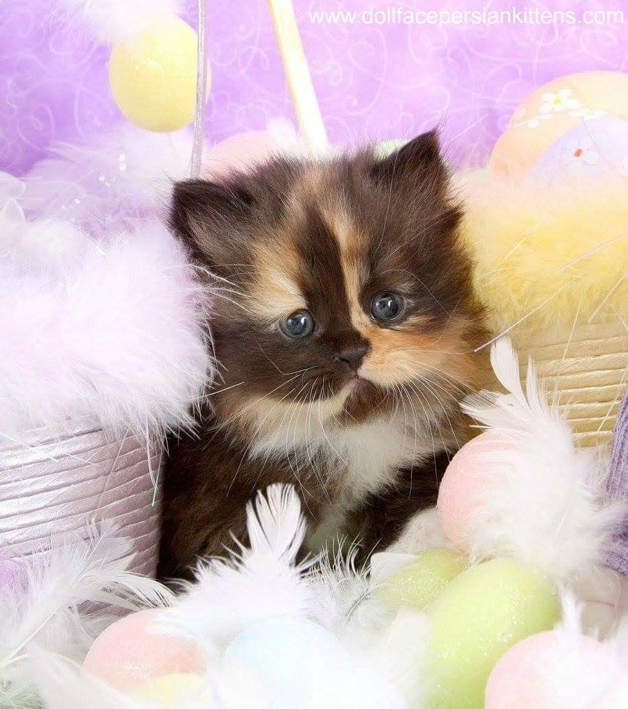 Pin by Marcie Cahill on Cute kittens in 2020 Cute cats
