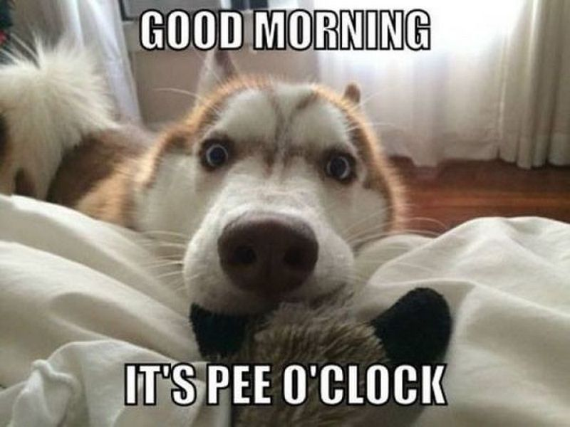 101 Good Morning Memes For Wishing A Beautiful Day For Him Her Good Morning Dog Dog Quotes Funny Funny Dog Memes