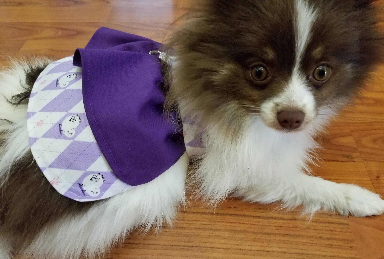 Adorable Dress Featuring Gidget The Pomeranian From Secret Life