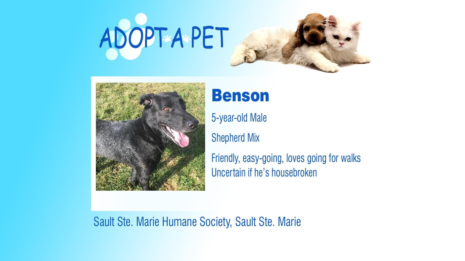 Adopt A Pet Tuesday Chloe & Benson Northern Michigan's