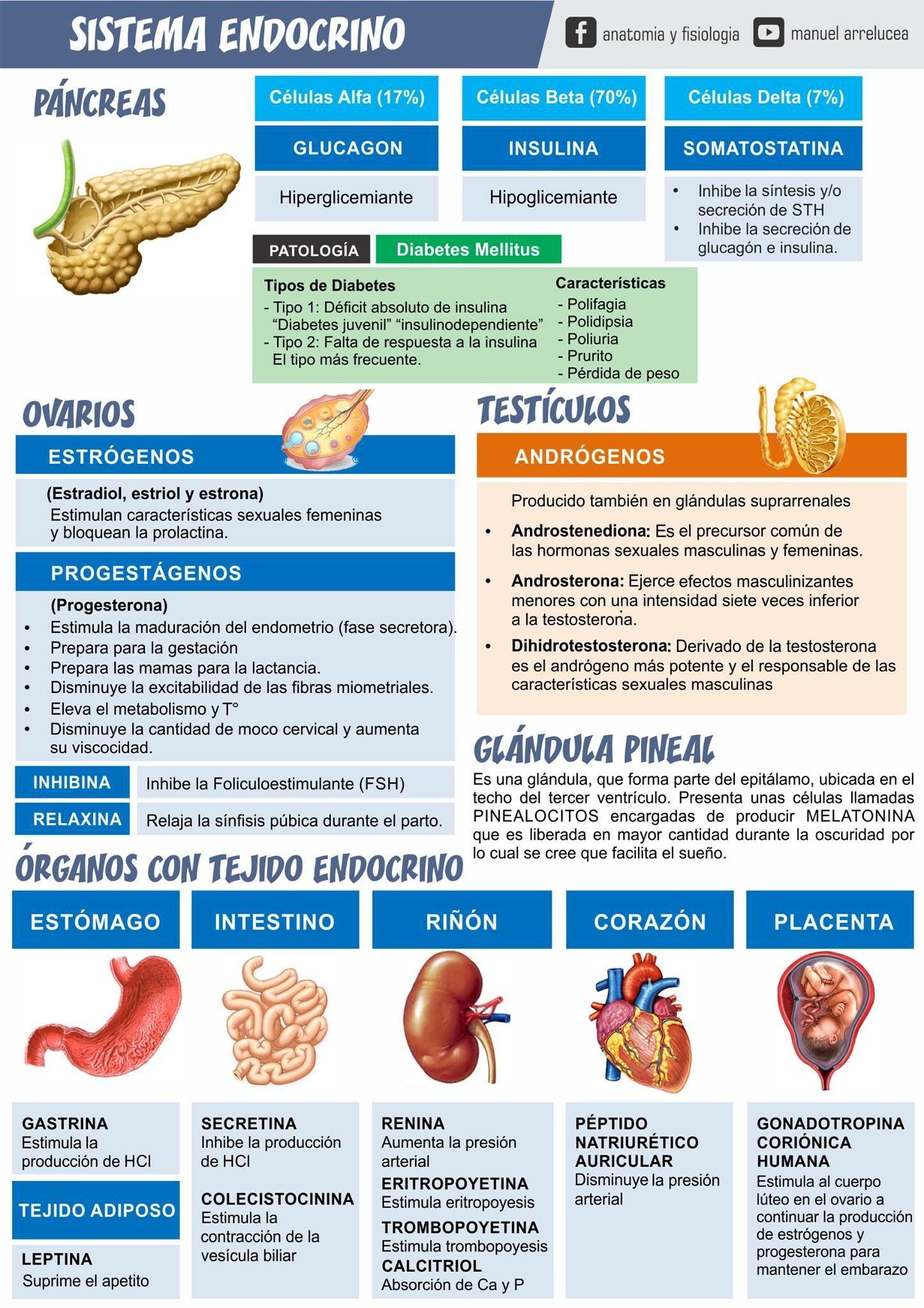 Pin de Daniel Saavedra en Infografías | Pinterest | Enfermería ...