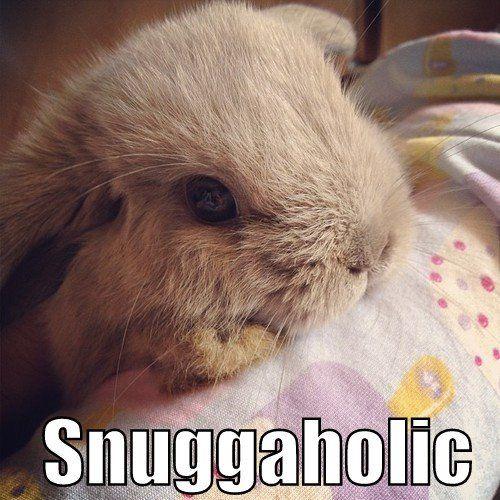 Snuggaholic (11/22/14)