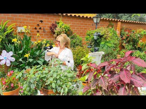 Pin En J Rosas Claveles Y Otras Cuidados Y Cultivo
