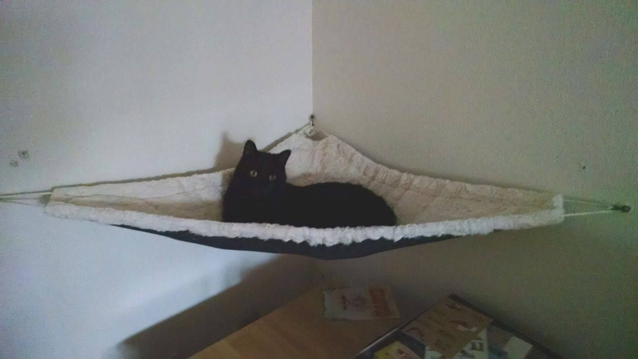 Corner Cat Hammock Prototype. Available End Of Oct.