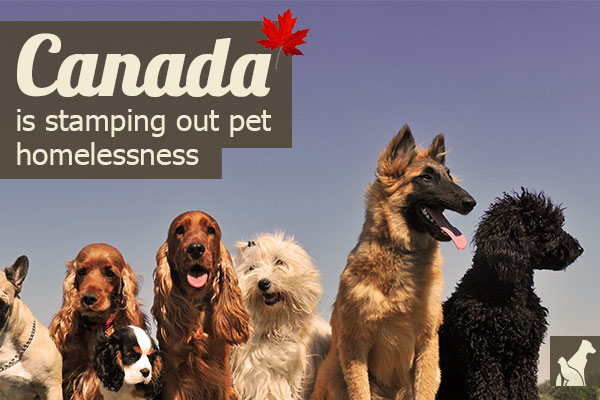 Canada is STAMPING OUT Pet Homelessness --> http://go.homesalive.ca/blog/bid/288674/Canada-is-Stamping-Out-Pet-Homelessness
