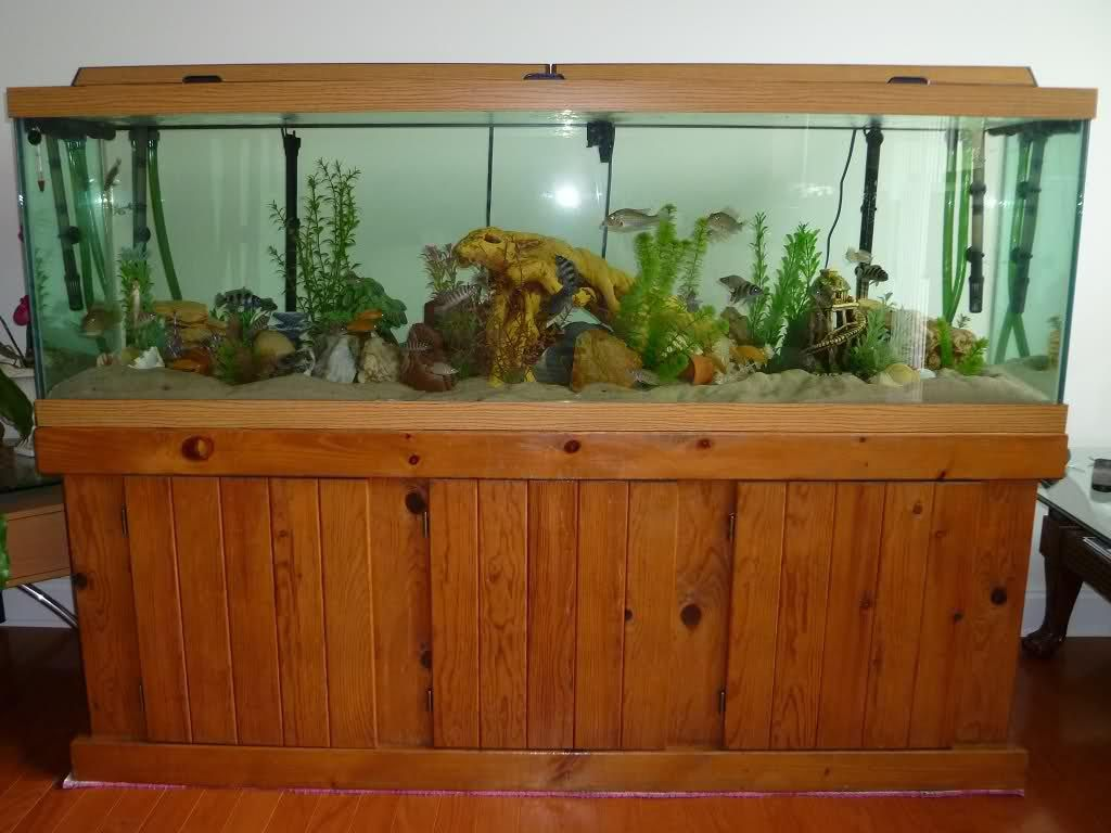 100 gallon aquarium glass thickness aquarium ideas