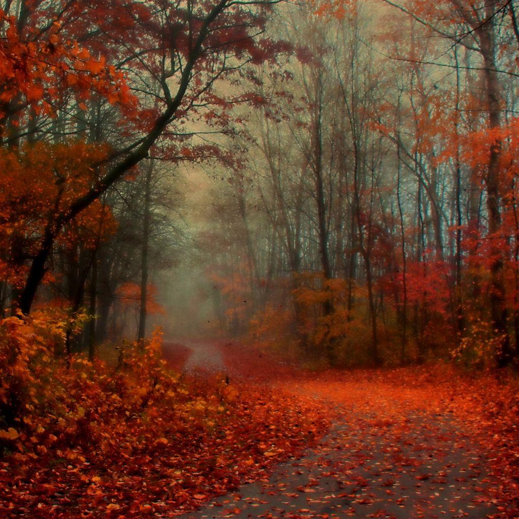 Romantic Autumn iPad Air Wallpapers Autumn forest, Ipad