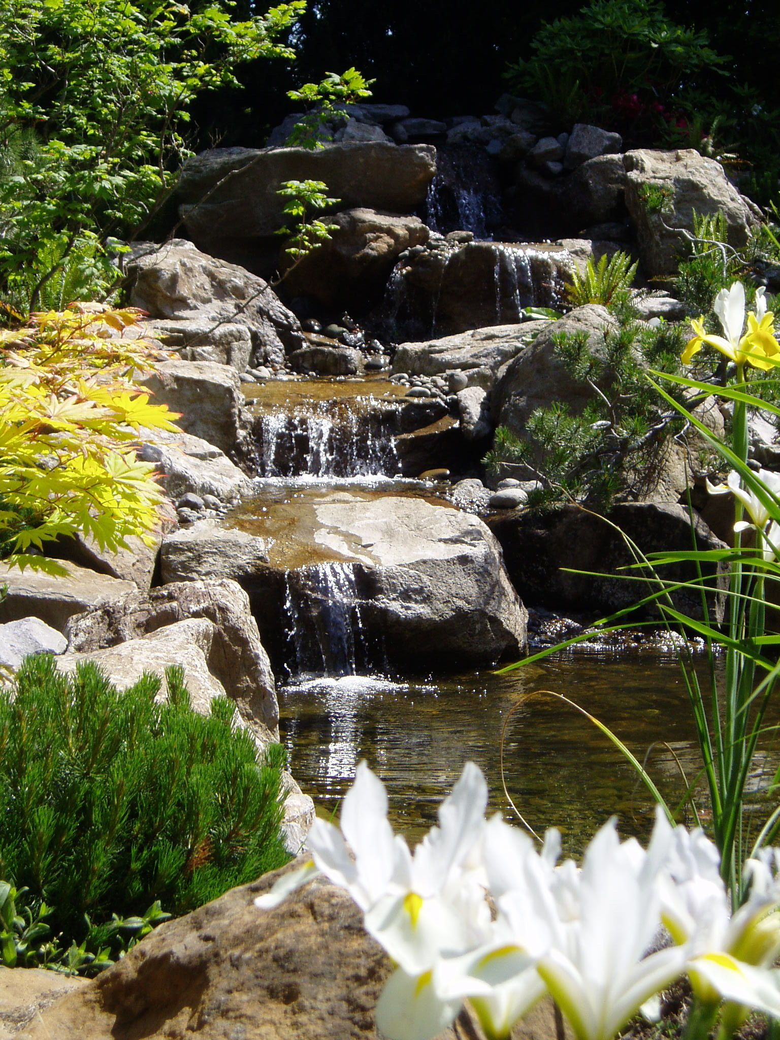Natural Looking Pond and Falls.  (Design & Install by McQuiggin's Inc)