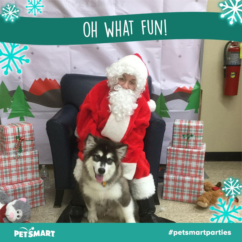 Petsmart Dog Traiing Class 2020 Review Is It Worth It Petsmart Dog Dogs Petsmart Dog Training