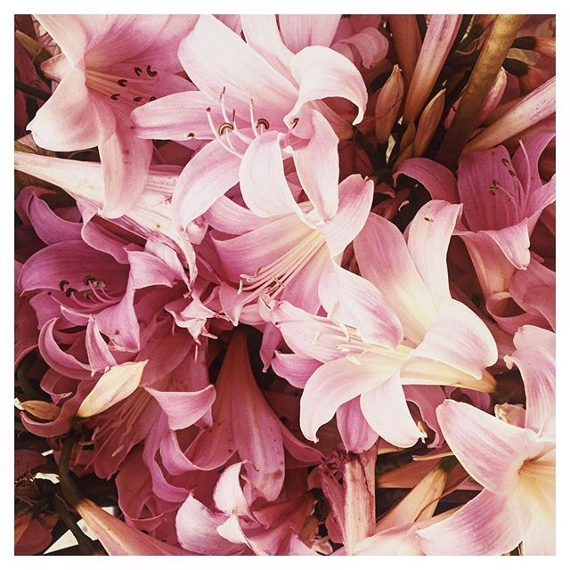 Think Pink! #howisummer #robotontheroad #flowersofinstagram