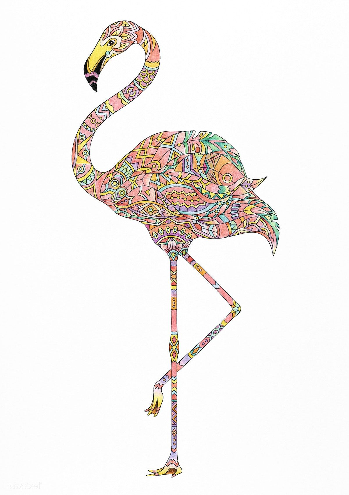 Pin On Coloured Bird Pictures