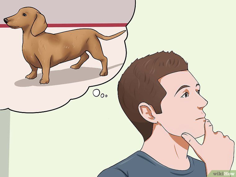 Get Your Small Dog To Stop Biting And Barking At You Dog