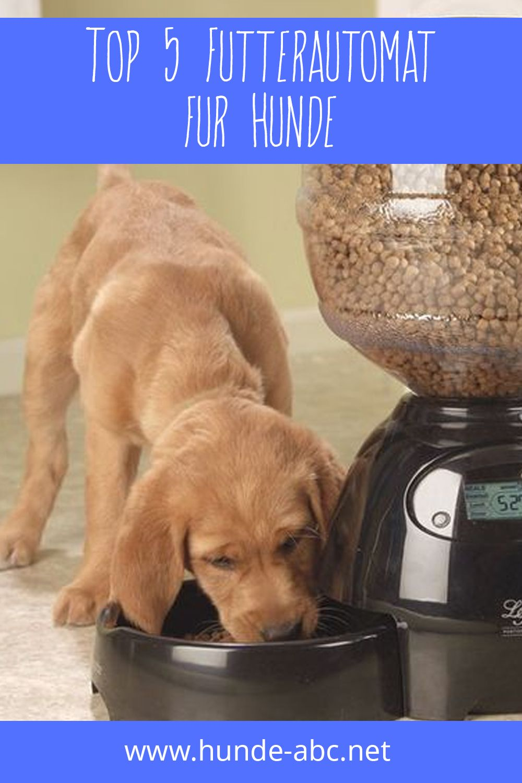 Top 5 Futterautomat Fur Hunde In 2020 Hunde Labrador Retrievers Hundefutter