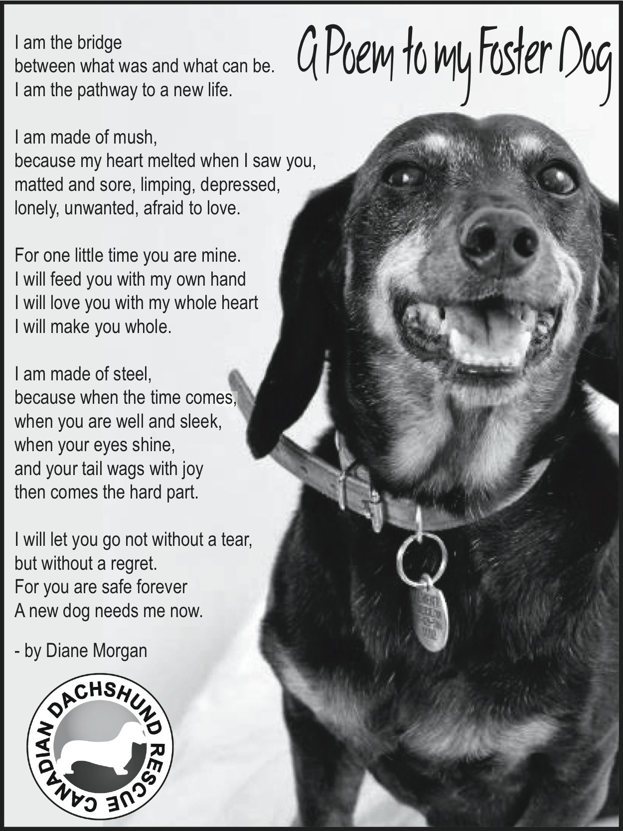 Canadian Dachshund Rescue Ontario Foster Dog Dog Poems Pet Poems