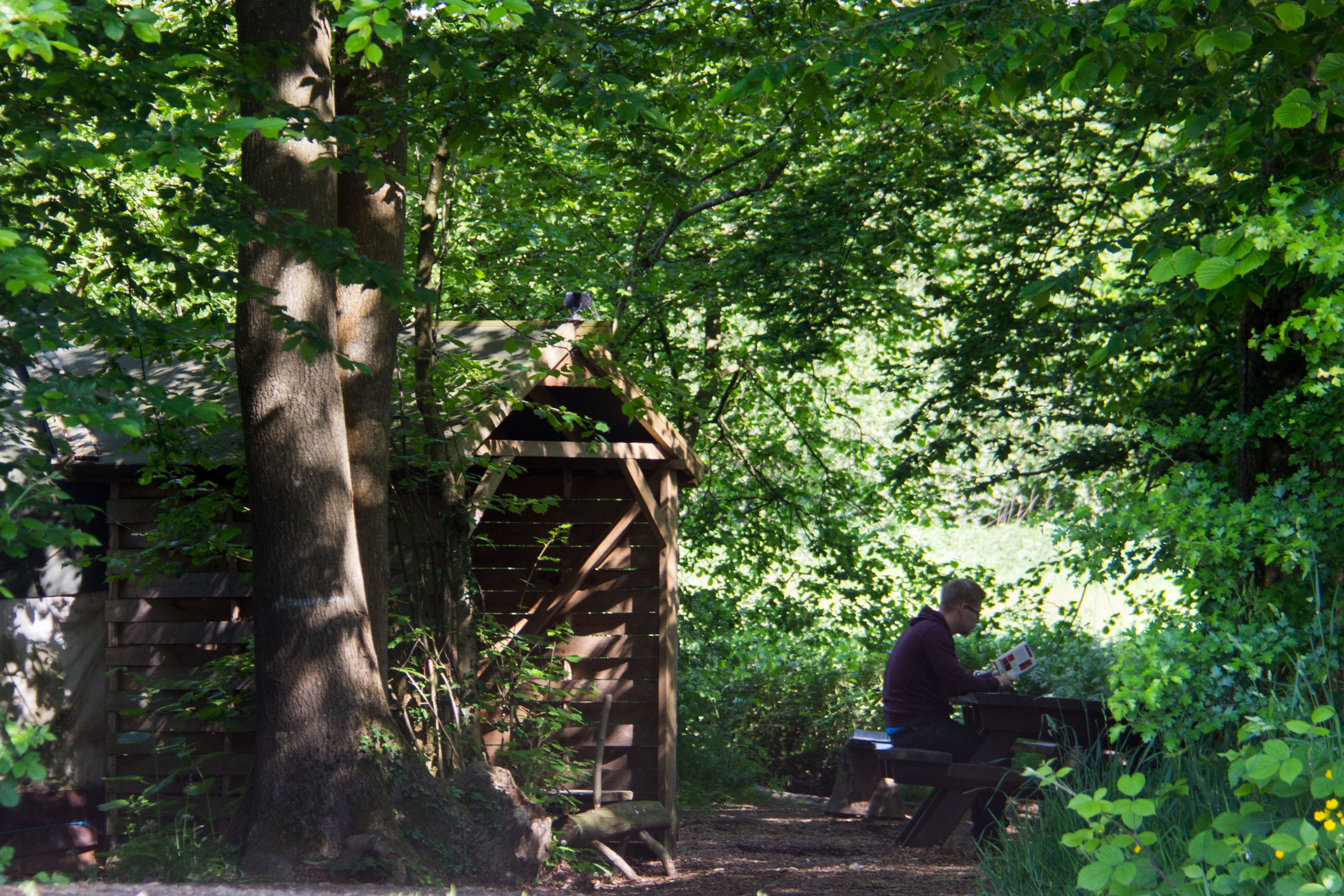 May 2015 - Reading outside the Woodland Yurt