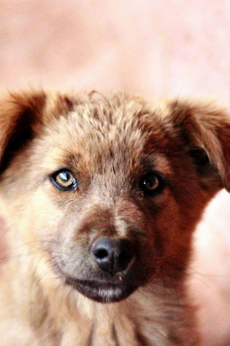 Cute dogs many individuals feel that dog training is