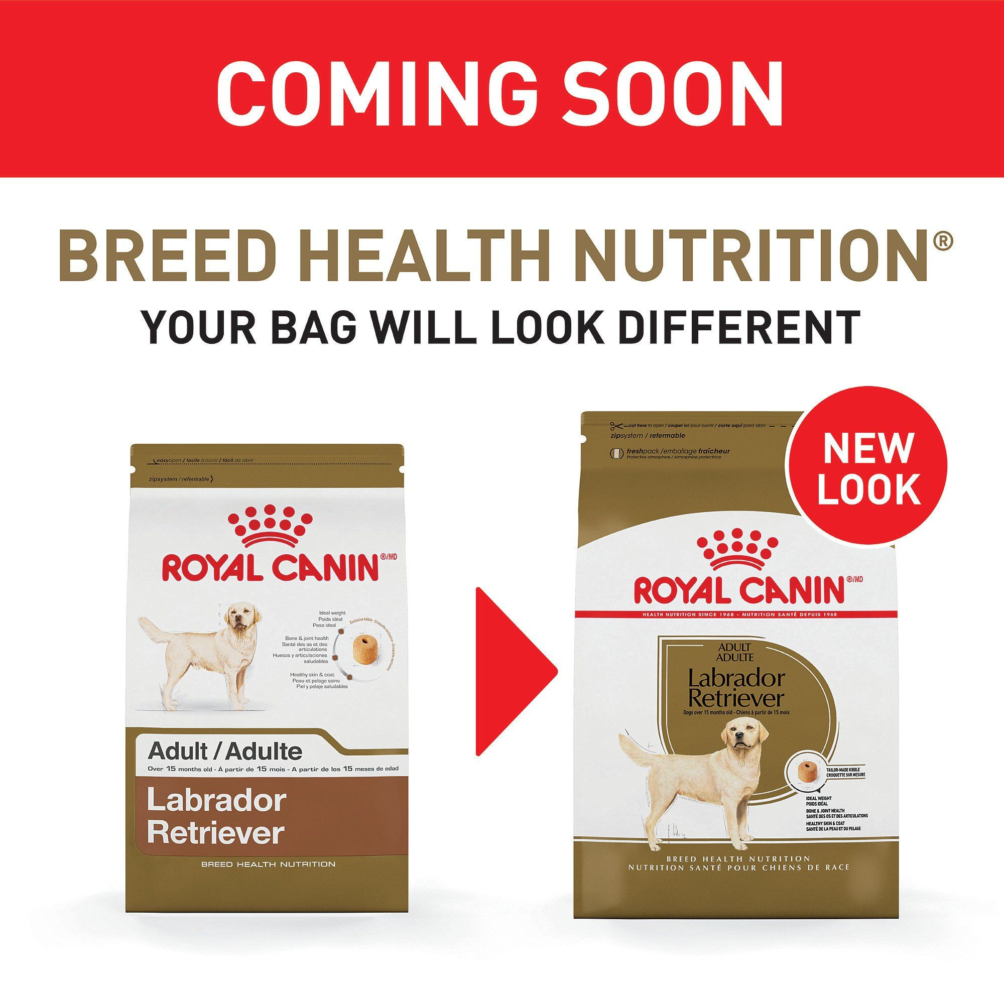 Royal Canin Breed Health Nutrition Labrador Retriever Adult Dry Dog Food 30 Lbs Dog Food Recipes Dry Dog Food Dogs