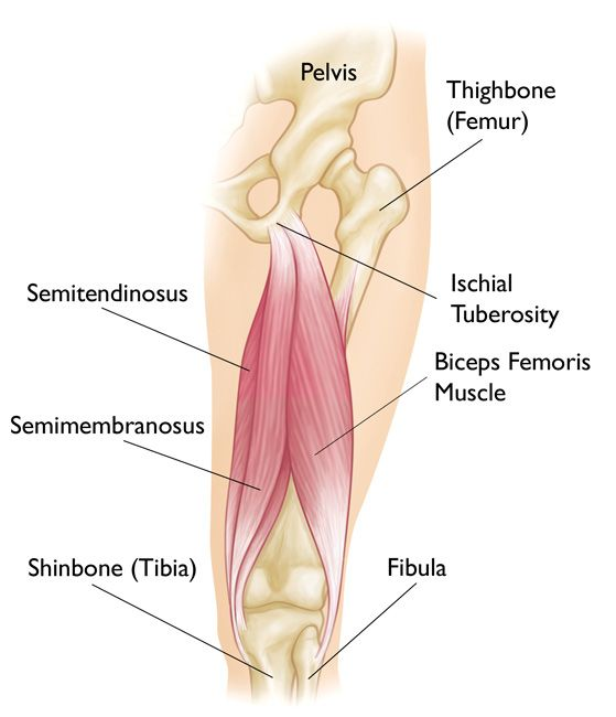 Hamstring Muscle Injuries Orthoinfo Aaos Knee Body Pinterest