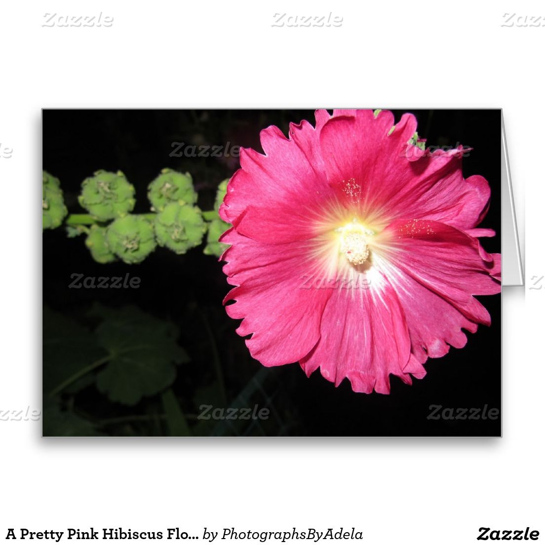 A Pretty Pink Hibiscus Flower Greeting Card Greeting Cards