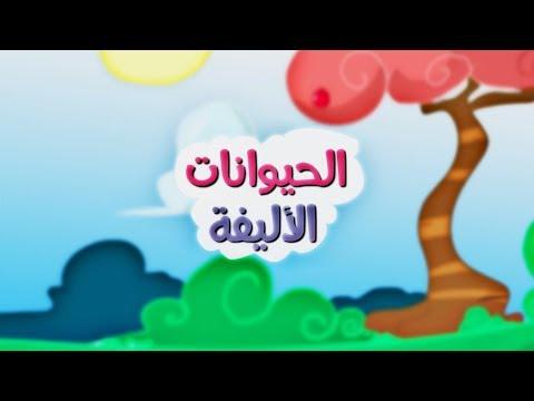 الحيوانات الأليفة بدون إيقاع طيور بيبي Toyor Baby Youtube Cartoon Kids Rhymes Cartoon