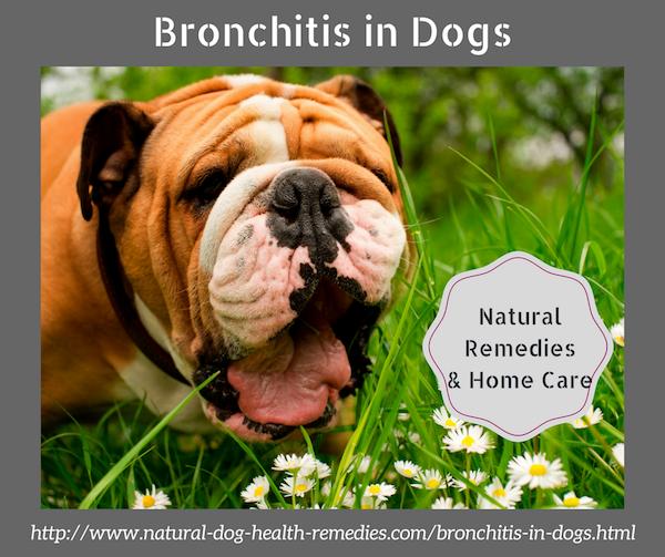 Chronic Bronchitis in Dogs | bronchitis in dogs | Dogs, Bronchitis