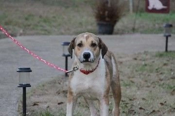 Check Out Bonnie S Profile On Allpaws Com And Help Her Get Adopted Bonnie Is An Adorable Dog That Needs A New Home H Dog Adoption Dogs Labrador Retriever Mix