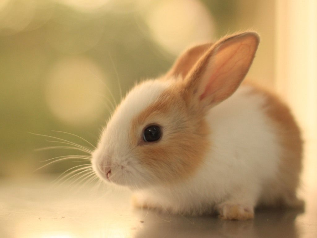50 Endangered Animals Pictures Wallpapers For Kids Cutee Animals Baby Animals Animals