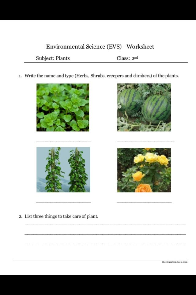 types of plants plants around us science worksheets environmental science plants. Black Bedroom Furniture Sets. Home Design Ideas