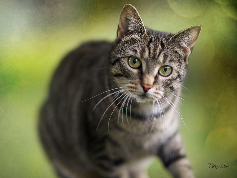 Jacky In July Warrior Cats Katzen Bilder Susse Katzen