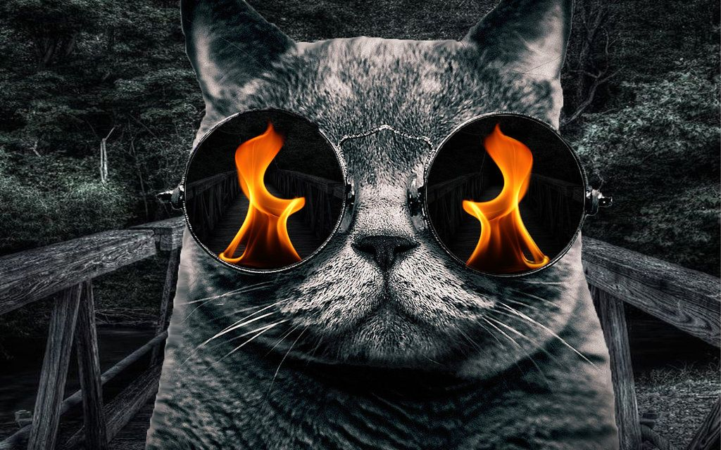 24 Awesome Trippy Cat Glasses Images Cool Wallpaper Animal Hipster