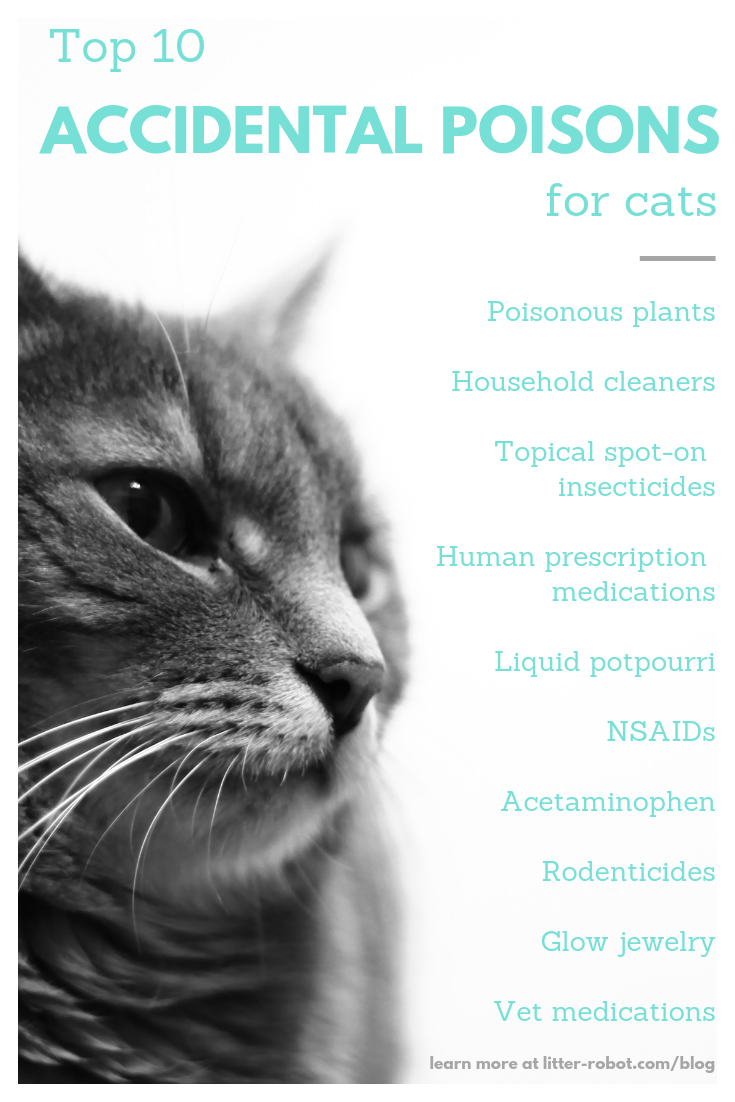Top 10 Accidental Poisons That Land Cats In The Emergency Vet Emergency Vet Cats Vets