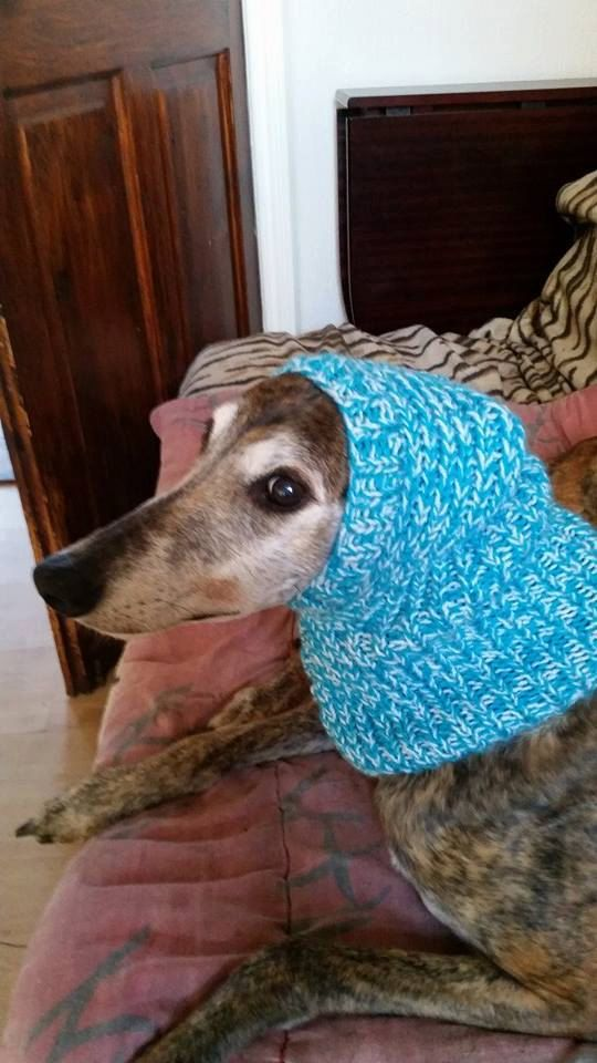 Greyhound Ribbed Hat Knitting Pattern Free UK postage by ...