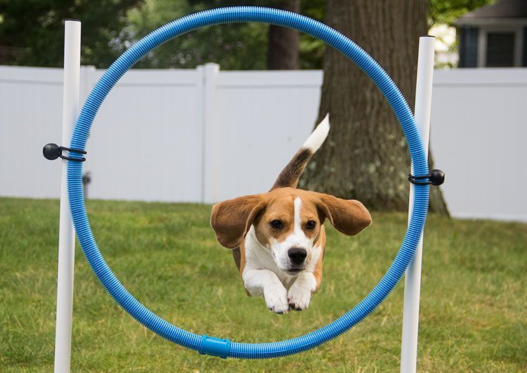 C Mon Let S Play What Are The Best Toys For Beagles In 2019